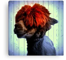 Odie the Alpaca, With a Spot of Color Canvas Print