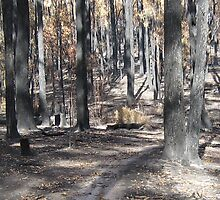 Photo of 'Barktown Light' after bush fire by Heidi Schwandt Garner