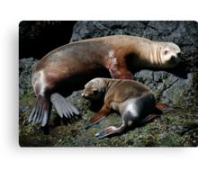 Californian Sea Lions Canvas Print
