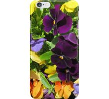 colorful spring pansies iPhone Case/Skin