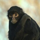 Spider Monkey 2 by Franco De Luca Calce