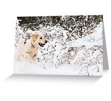 Sheer Joy Greeting Card