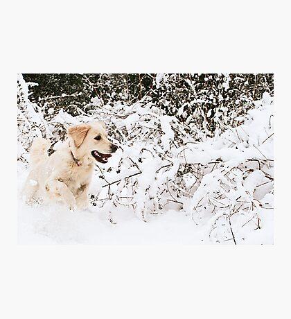 Sheer Joy Photographic Print