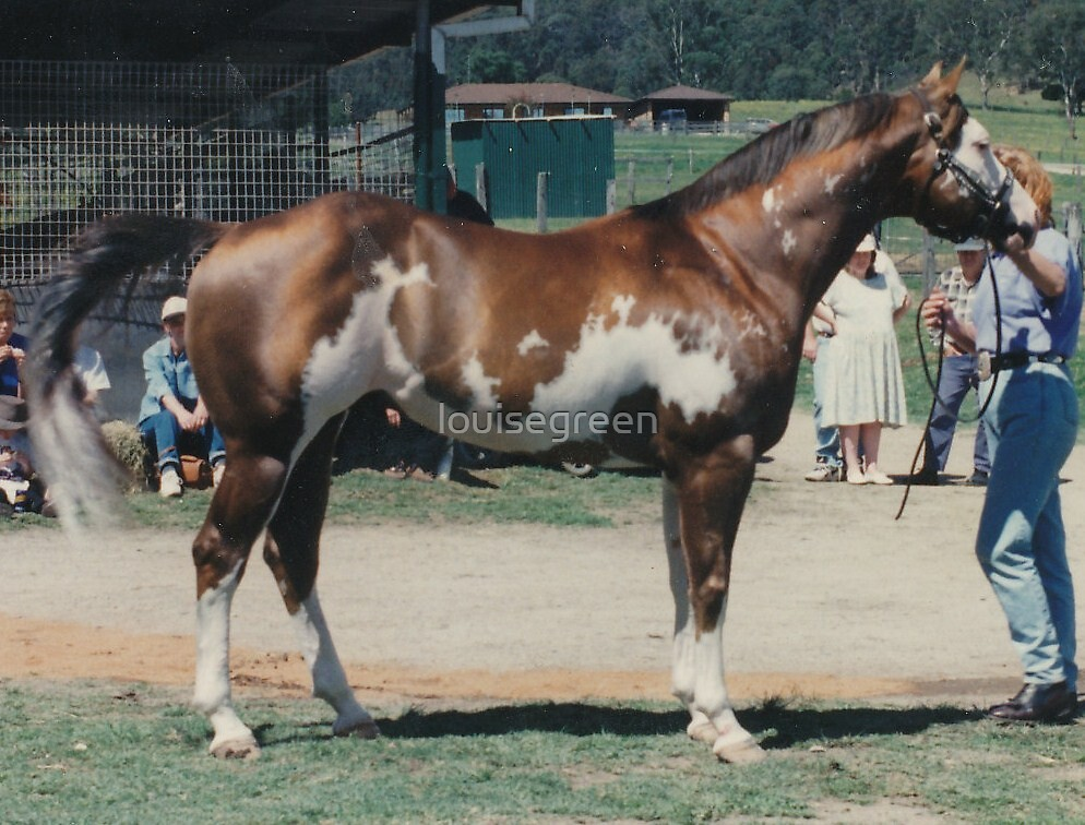 """APHA World Champion - """"Just Shameless"""" (Sept 1997) by louisegreen"""