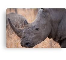 White Rhinoceros, Kruger National Park, South Africa Canvas Print