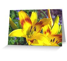 Raindrops on daylilies Greeting Card