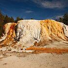 Orange Spring Mound by Olga Zvereva