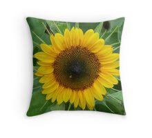 sunflower in full bloom Throw Pillow