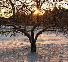 Apple Tree in Winter 2 by mlentz