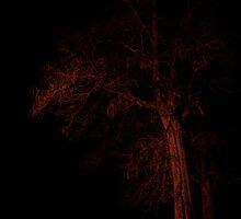 Night Tree by jbears