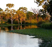 """Down by the Billabong"" by Sue  Fellows"
