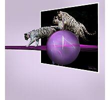 White tigers Escape Photographic Print