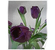 Pretty Purple Tulips Poster