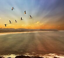 Morning Rays by john NORRIS