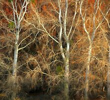 Trees by Barbara  Brown