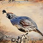 Happy Quail by Barbara Manis