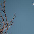 Tree Limb Moon by Cheyenne