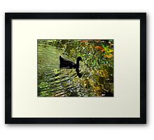 Silky waters Framed Print