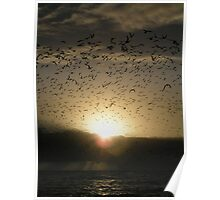Avian Dawn Poster