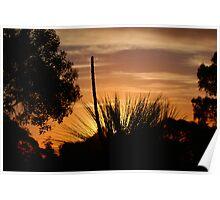 Grasstree sunset Perth Poster