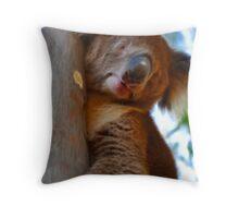 Koala at Bonython Park Throw Pillow