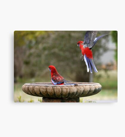 Move Over, or I will land on your head ! Canvas Print