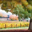 Boynton's Feathertop Winery #4 by Mieke Boynton