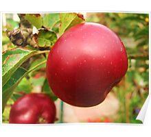 my apple tree Poster