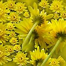 yellow floral world by lensbaby