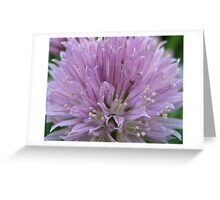 Chives!   Greeting Card