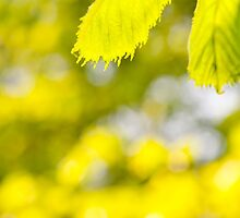 Spring green leaves and blurred space by Arletta Cwalina