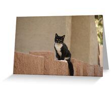 Neighborhood Cat Greeting Card