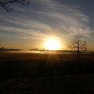 Morning Fog by Melissa  W
