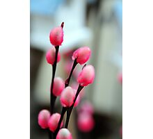 SPRING FLOWERS Photographic Print