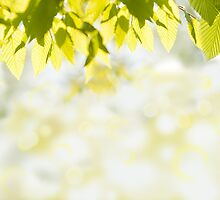 Elm green leaves and blurred space by Arletta Cwalina