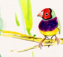 Gouldian Finch Sticker