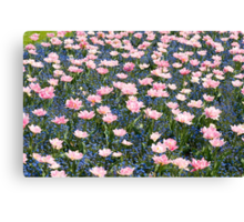 Pink Foxtrot tulips abstract Canvas Print