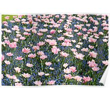 Pink Foxtrot tulips abstract Poster