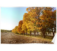 Yellow tree road Poster