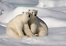 Polar Bear Brothers by Steve Bulford