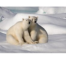 Polar Bear Brothers Photographic Print