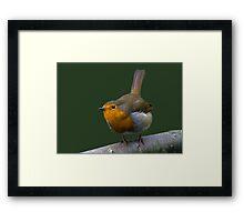 Watch the Birdie! Framed Print