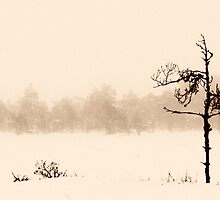 From the Fog IV by Petri Volanen