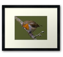 Oh no, not another Robin......... Framed Print