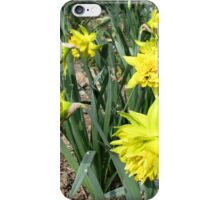 Hello Spring with a Smile of Daffodils iPhone Case/Skin
