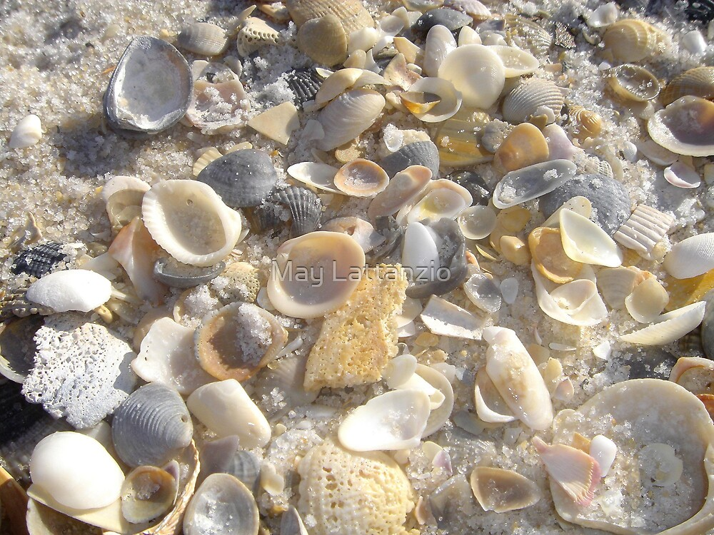 Shells at Tideline by May Lattanzio