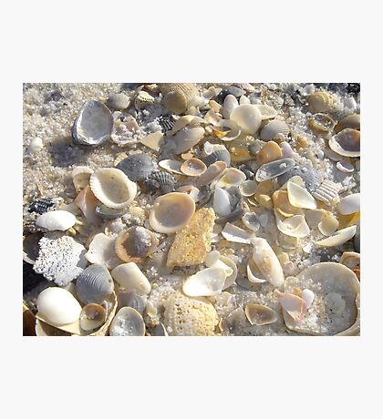 Shells at Tideline Photographic Print