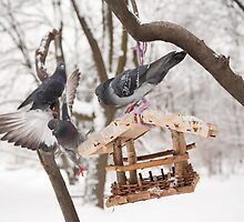 pigeons sitting on bird feeder by Arletta Cwalina