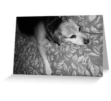 Tired Doggy Stretches Out Greeting Card