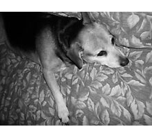 Tired Doggy Stretches Out Photographic Print